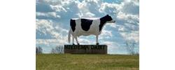 Miedema Dairy